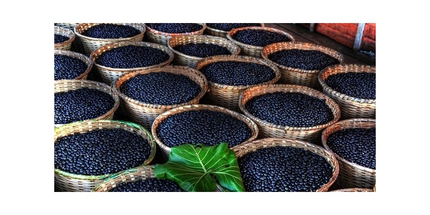 Benefits Of Acai Supplementation